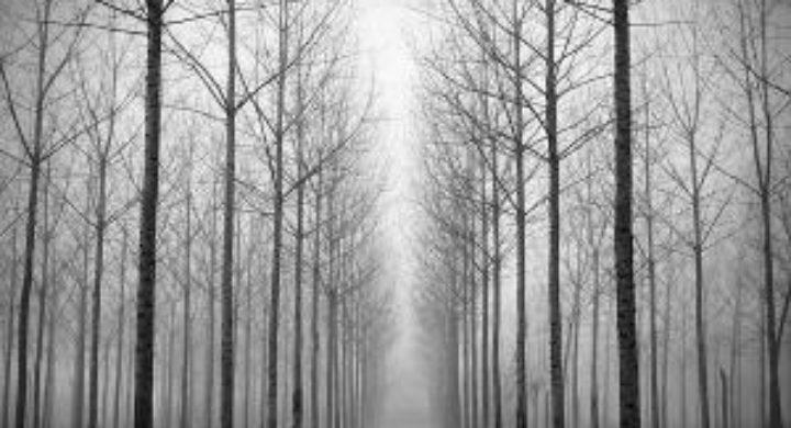 Convocada la XXXIII edición del Concurso de Fotografía del CMU San Isidoro